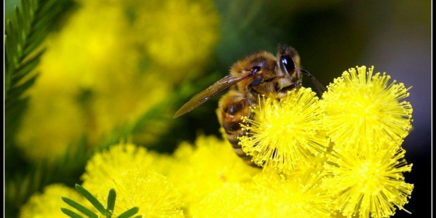 Plantes à fleurs pour les abeilles