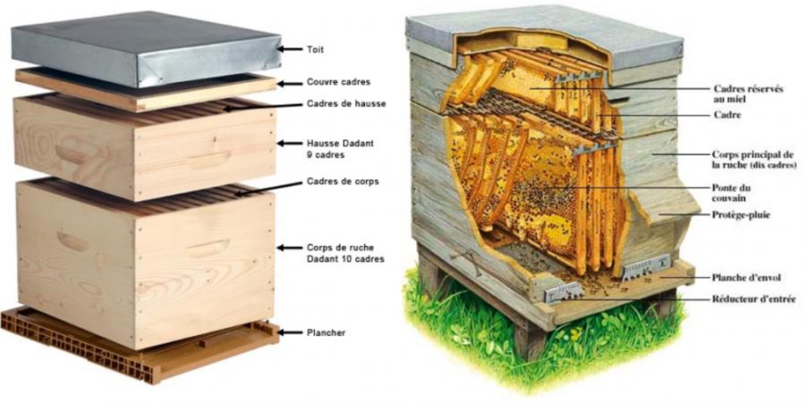 Les différentes parties d'une ruche